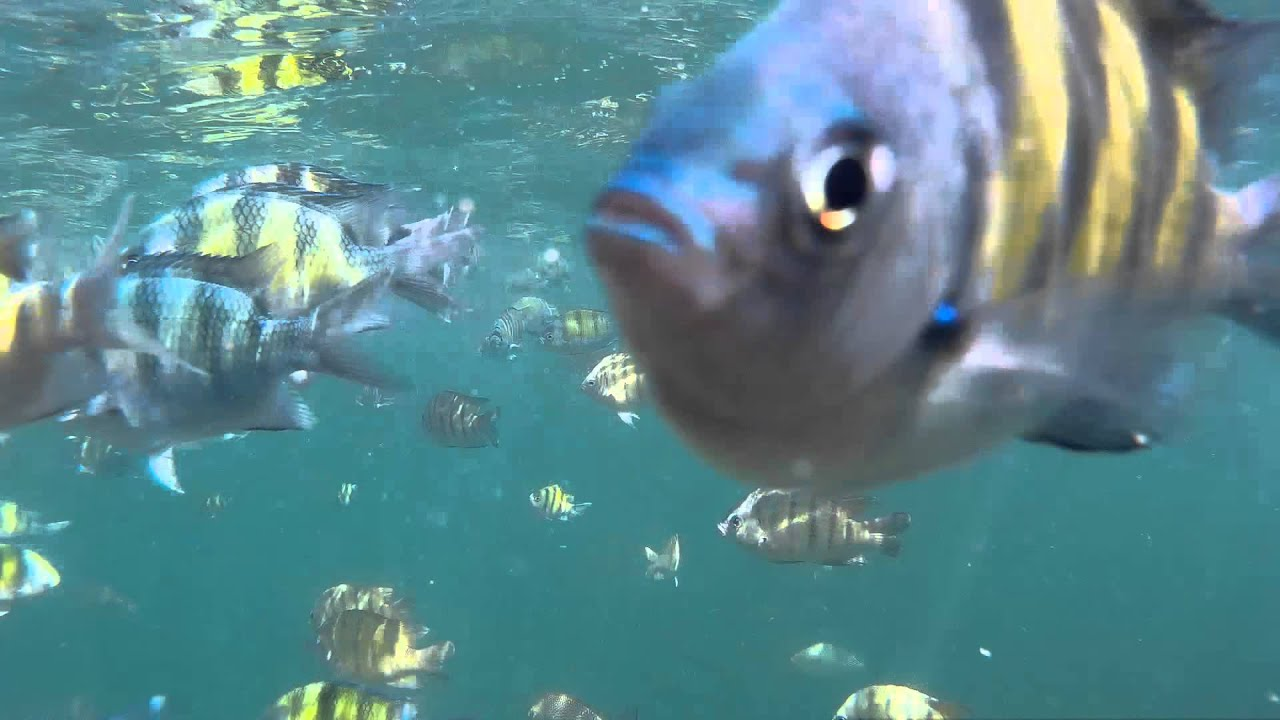 Download ปลาจะกินกล้องฉันไหม