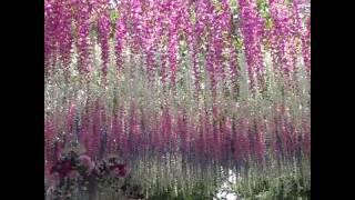 Цветочная арка красота бесплатная москва