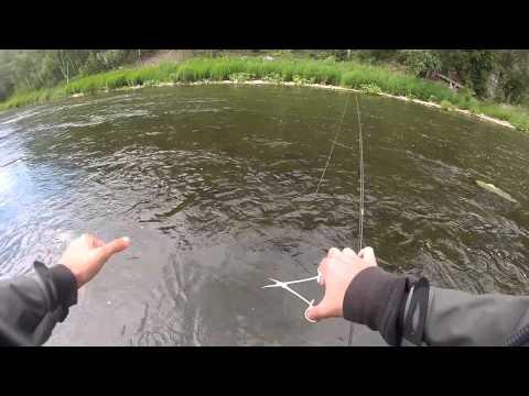 CoolBaits - Голавлик Большой Сатки / Chub Of Big Satka River (13.07.2014г.)