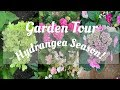 JULY GARDEN TOUR: Hydrangea Season