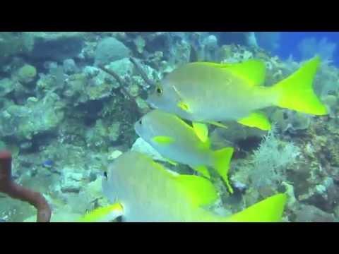 Scuba Diving in Grand Cayman 2012