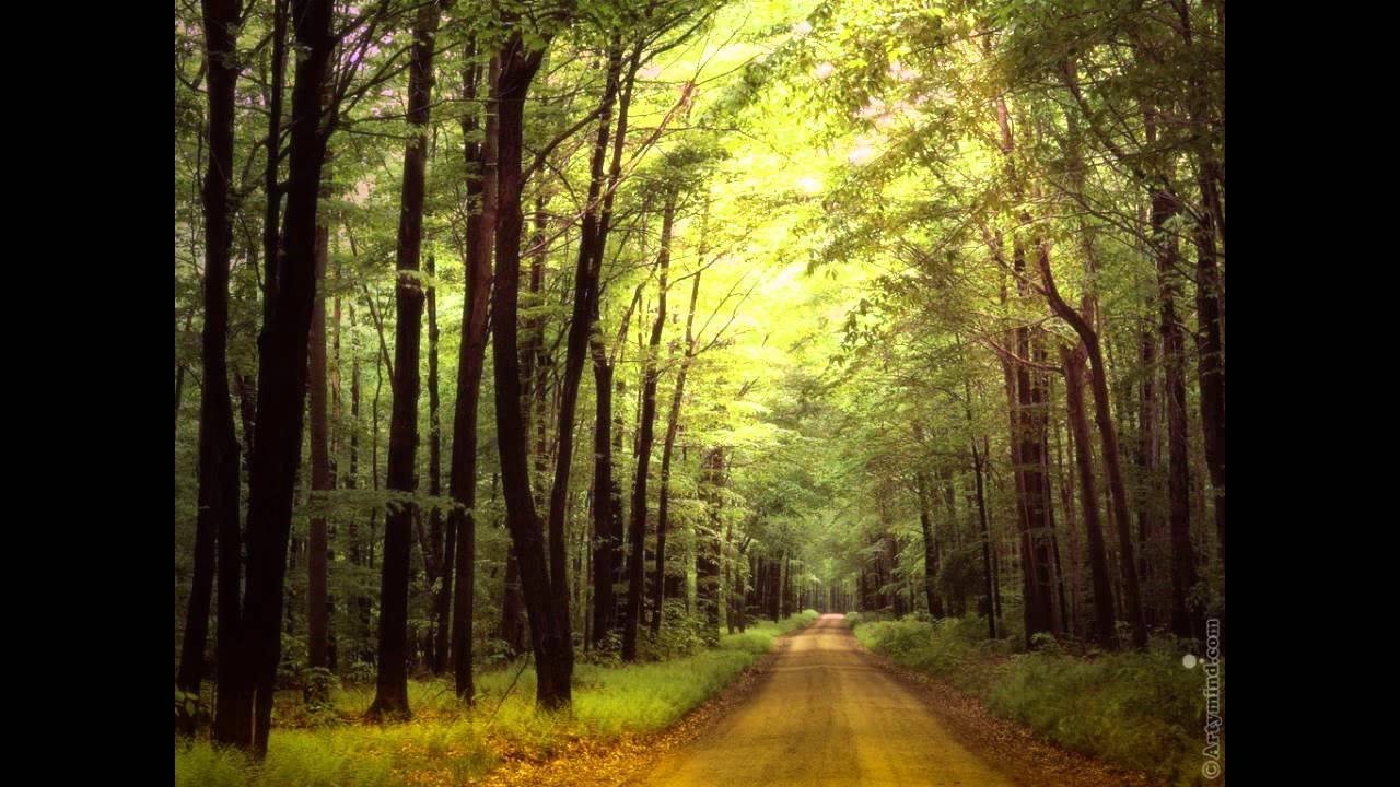 Yiruma Moonlight Forest Sound Youtube
