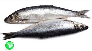 СЕЛЕДКА. Полезна или вредна на самом деле соленая рыбка для организма человека.