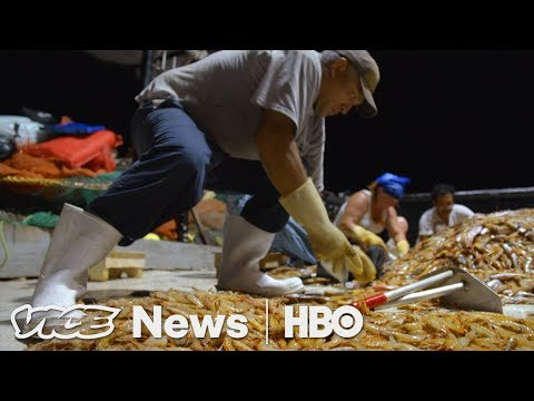 American Workers Are Learning That Shrimpin' Ain't Easy (HBO)