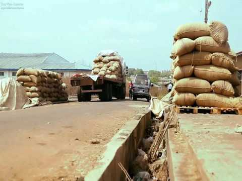 Cashew: Nigeria's Untapped Gold Mine