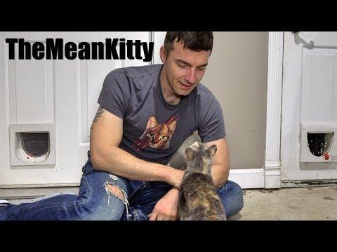 Cute Homeless Kitten Update - She's In The House!