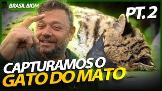 CAPTURAMOS O MAIOR GATO SELVAGEM DOS PAMPAS GAÚCHOS!   RICHARD RASMUSSEN