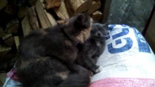 что нельзя давать кошкам?😐😶