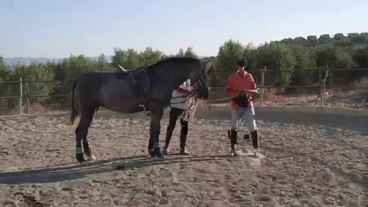 ¡Única DN montada! (extracto del vídeo original) - Yeguada Juan Díaz Navarro