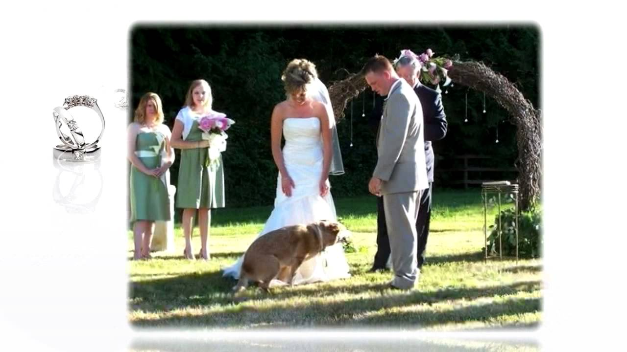 dogs weddings fsproject youtube