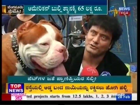 Bangalore Pet Show 2016 ETV