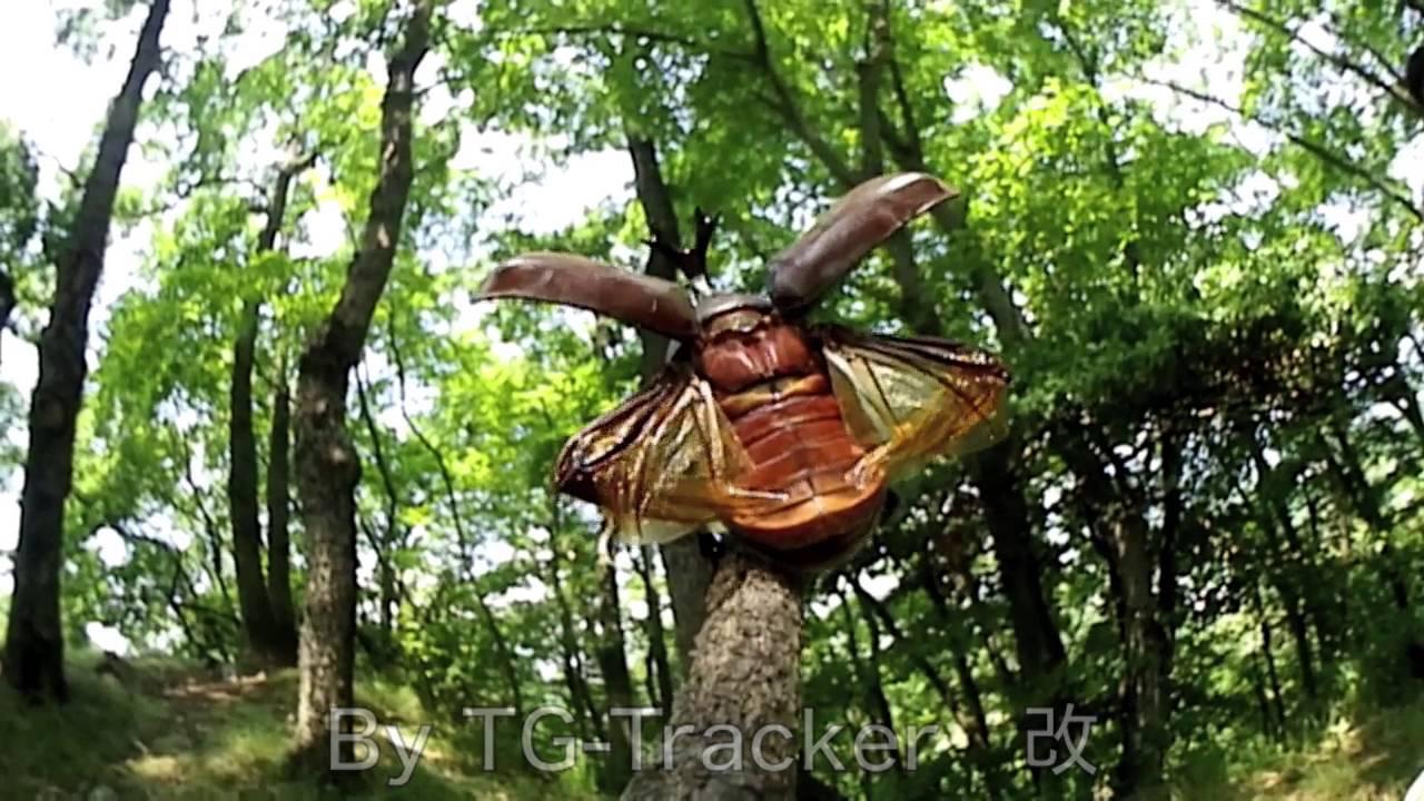 メス 飛ぶ カブトムシ