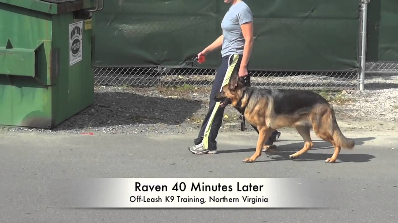 Best Dog Trainers In Dc