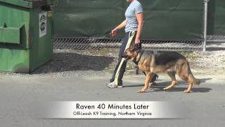 1.5 Year Old German Shepherd Before/after Heel Lesson: Best Dog Trainers Northern Virginia, Dc, Md