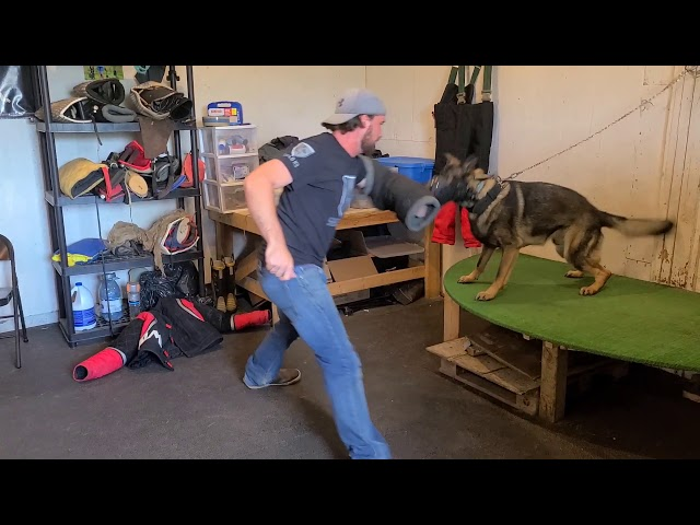 How to muzzle attack K9 training