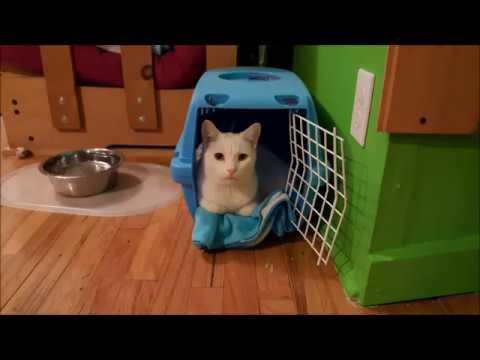 Apprendre à son chat à aller dans sa cage au clicker