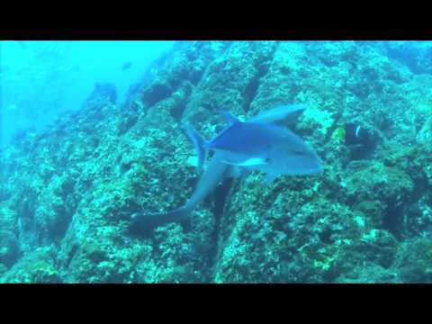 Swim with the White Tipped Reef Sharks at Islas Secas
