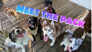 MEET THE PACK! / ALL 9 OF MY DOGS!