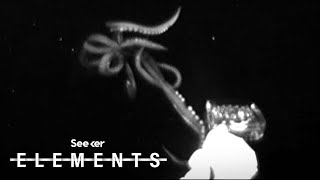 Scientists Just Captured This Rare Giant Squid Footage, Heres How