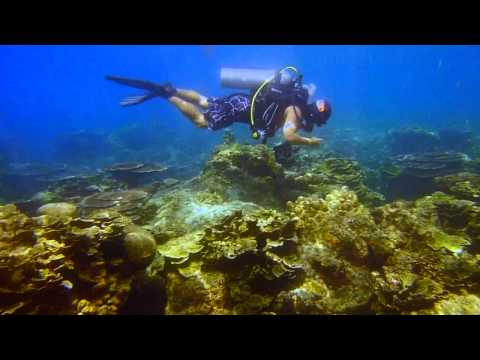 A Journey into The Underwater World - Diving at Pulau Dayang, Malaysia [HD 720p]