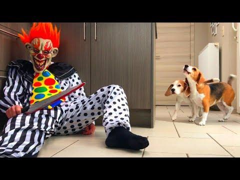 Halloween : Funny Dog Vs Wannabe IT Clown