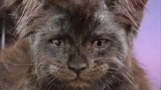 """Похожа на кота из """"Алиса в стране чудес"""""""