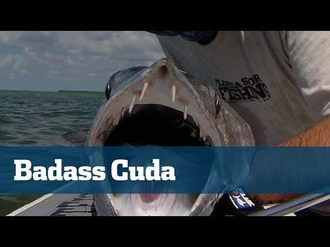 Big Badass Barracuda Deserve More Recognition  - Florida Sport Fishing TV