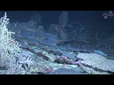 Scott Reef ROV Dive 3 - Falkor