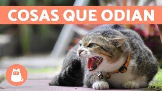 10 cosas que los gatos odian y debes evitar