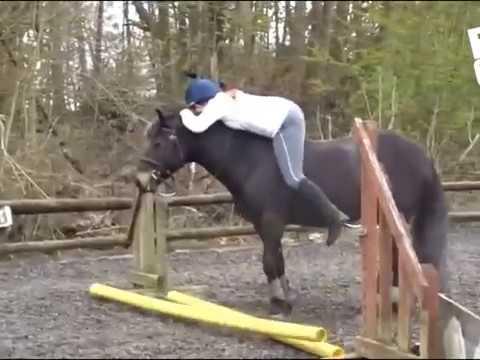 Смешные лошади. смотреть онлайн видео от Юрич в хорошем