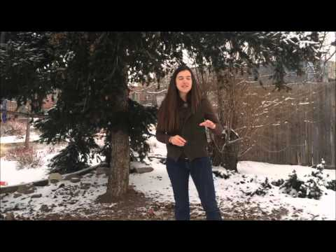 Winter Botanizing with Kat | Colorado School of Clinical Herbalism