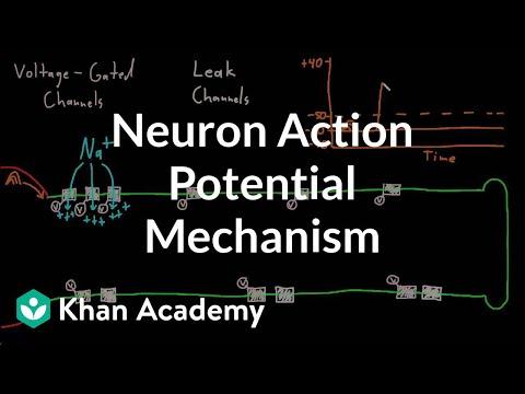 Neuron action potential mechanism | Nervous system physiology | NCLEX-RN | Khan Academy