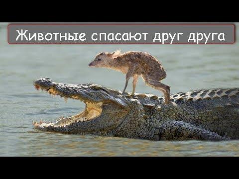 14 Случаев невероятного спасения животных из лап хищников!