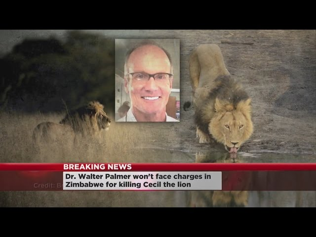 Reports: Dentist Won't Be Charged In Cecil The Lion's Death