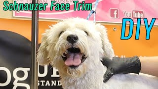 The Easiest Schnauzer Face Trim To Do yourself