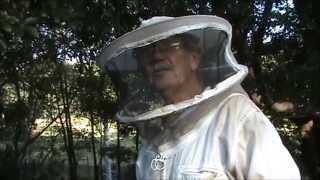 Beekeeping: Making a Queen Bee by Natural Selection.