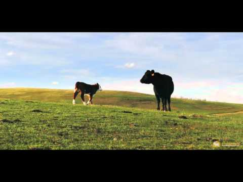 Amazing California Ranch | Elder Creek Ranch, Tehama County, CA
