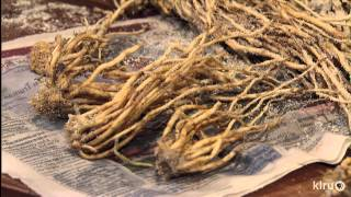 How To Grow Organic Asparagus |john Dromgoole |central Texas Gardener
