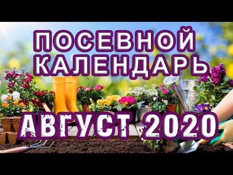 Лунный ПОСЕВНОЙ календарь на АВГУСТ 2020 �� КАЛЕНДАРЬ ОГОРОДНИКА и САДОВОДА