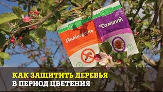 Как защитить деревья в период цветения
