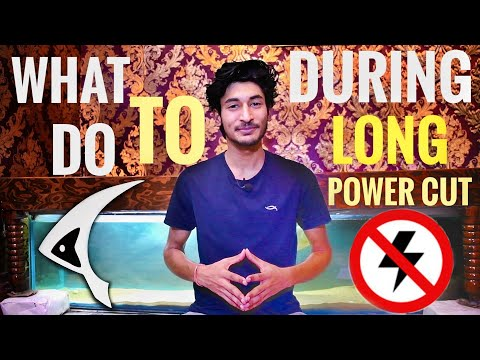 How To Save Fish During Power Cut | HOW TO: Survive A Power Outage - Aquariums