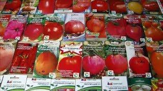 Семена томатов на 2019 год.  Какие Томатные деревья буду сажать.