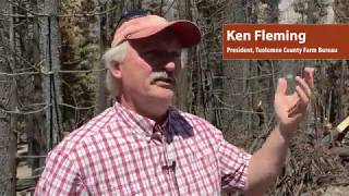 Foresters assess prospects as wildfires rage