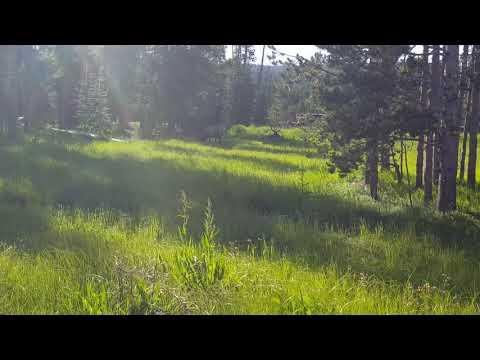 Yellowstone. ELK sighting.
