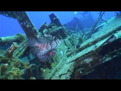 Cayman Brac Scuba Diving with Reef Divers