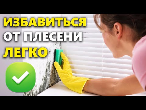 Как избавиться от плесени в квартире на стенах в домашних условиях