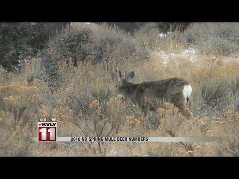 Mule Deer Population