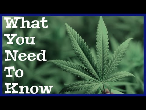 The Government Is Terrified You'll Find Out The Truth About Cannabis