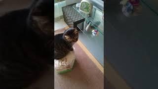 クーはTVに興味深いがゴン太は興味無し.