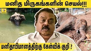 Vijayakanth on Kerala Elephant